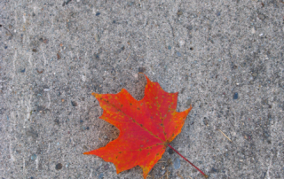 Maple leaf on concrete
