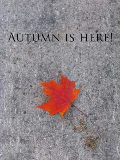 Maple leaf on concrete