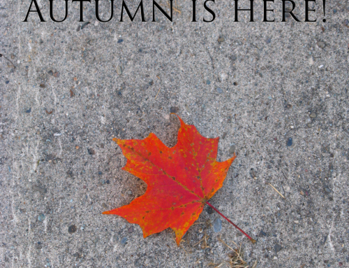 Playlist Friday: A Canadian Indie Autumn